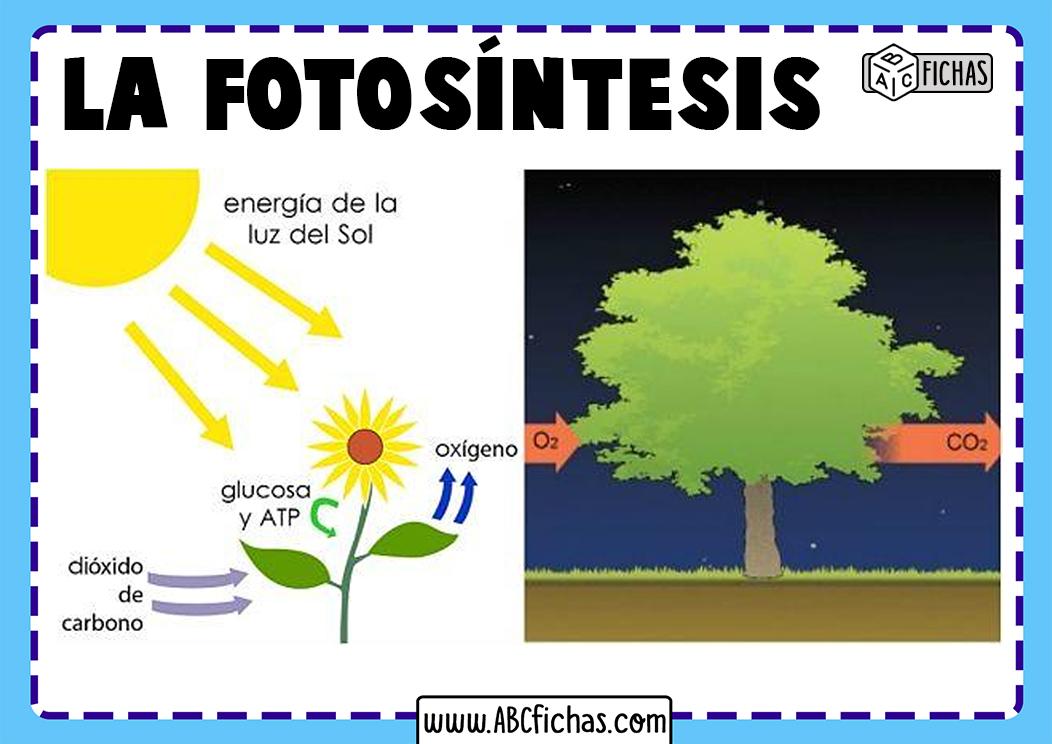 Esquema proceso fotosintesis