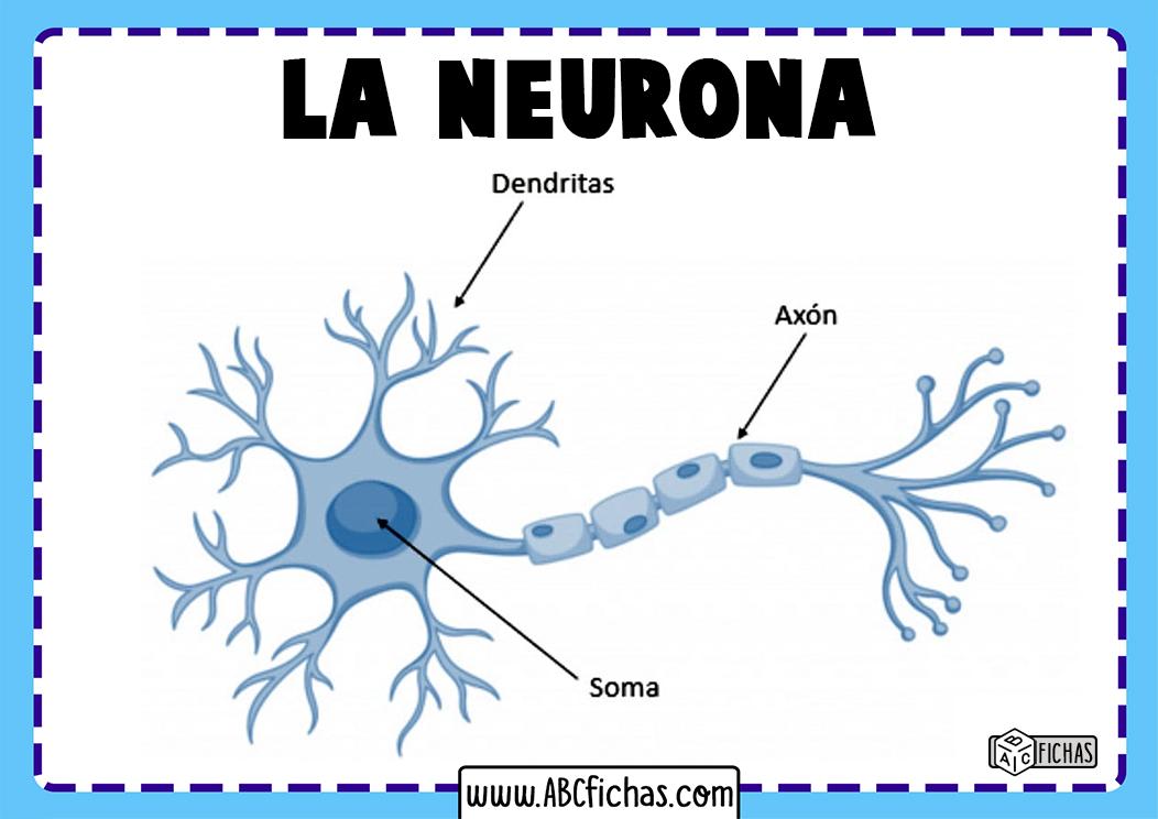Estructura de la neurona