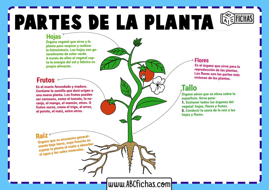 Estructura de la planta