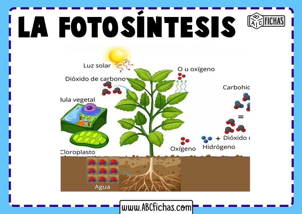 Explicacion de la fotosintesis