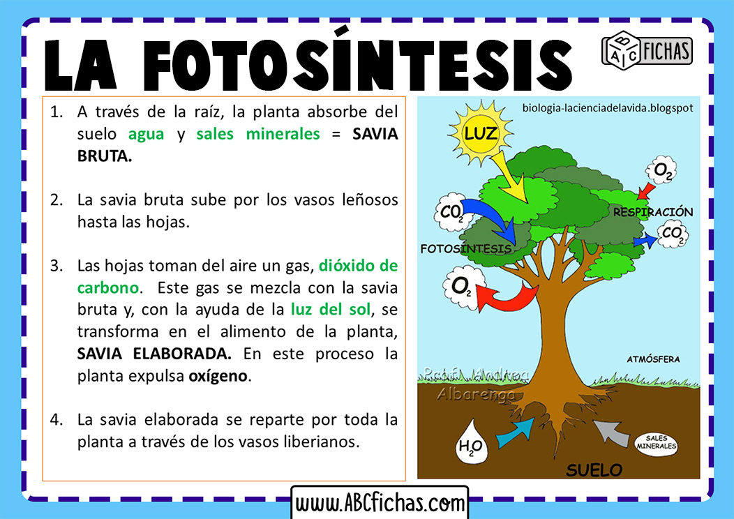 Fotosintesis plantas explicacion