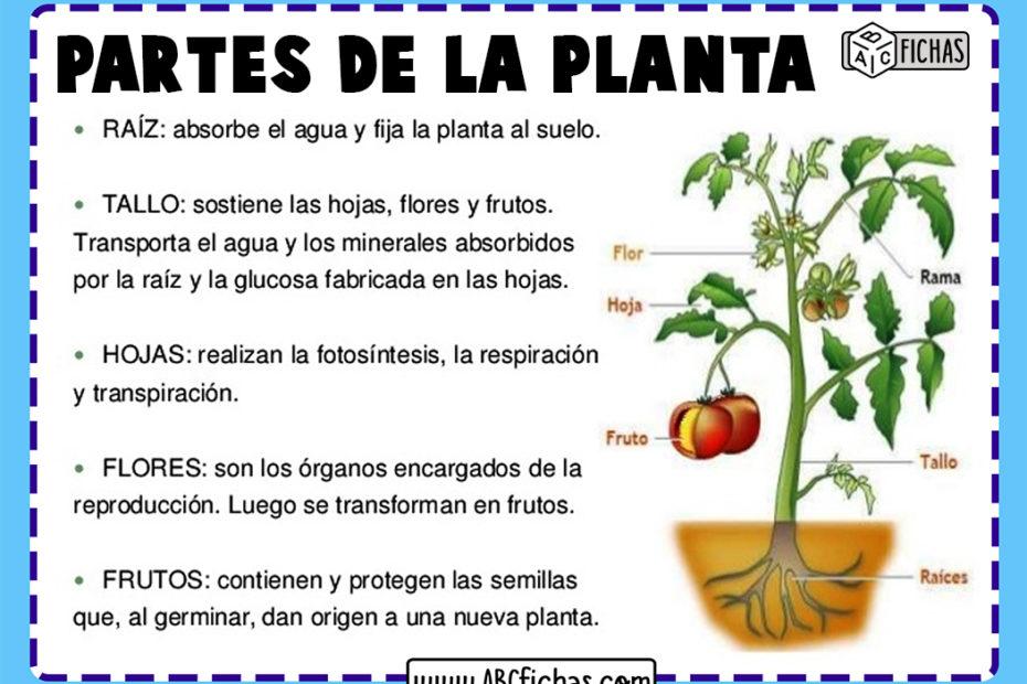Funciones y partes de la planta