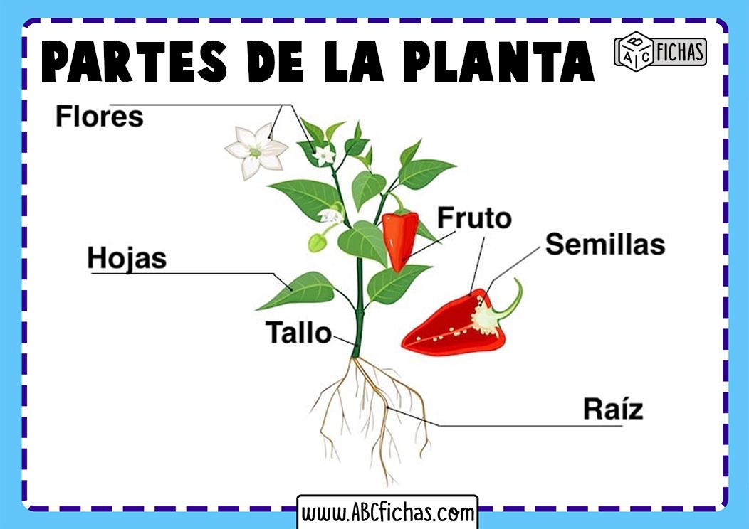 Partes que forman una planta