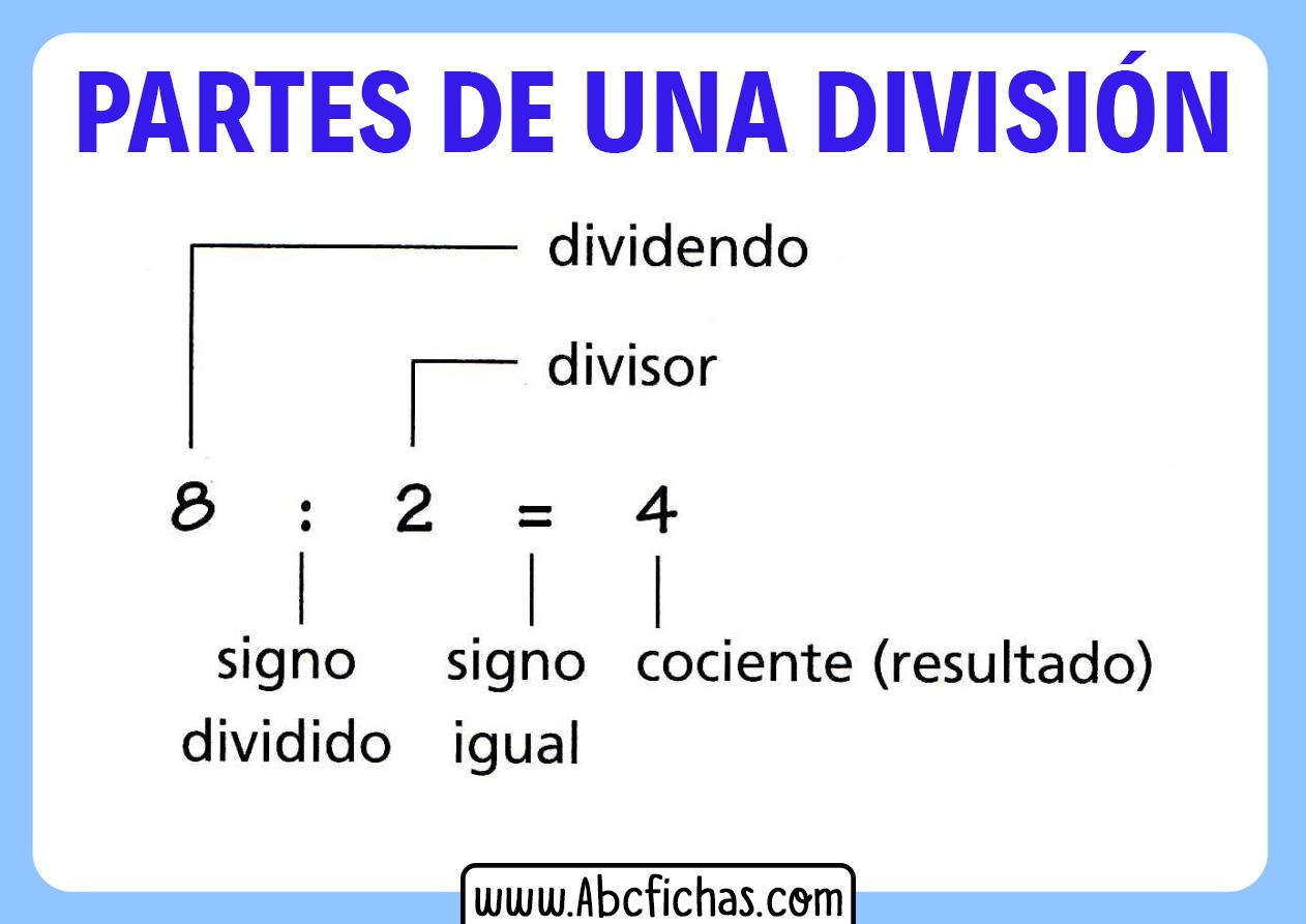 Estructura y partes de una división