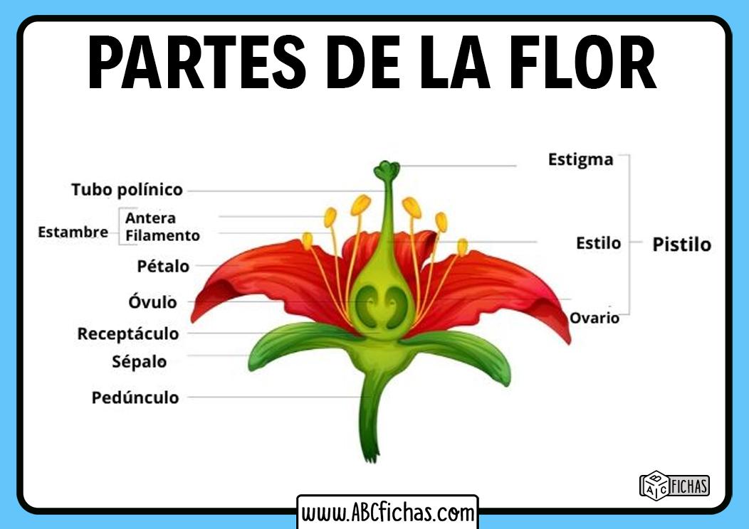 Partes de una flor para niños