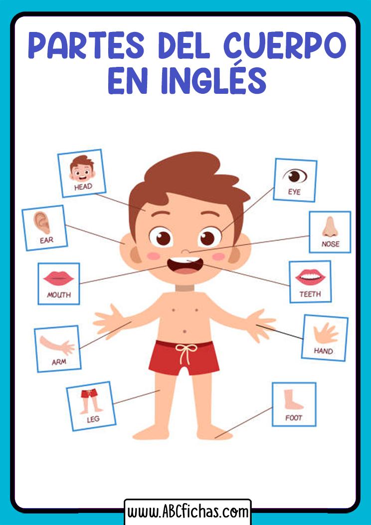 Partes del cuerpo humano en ingles para niños
