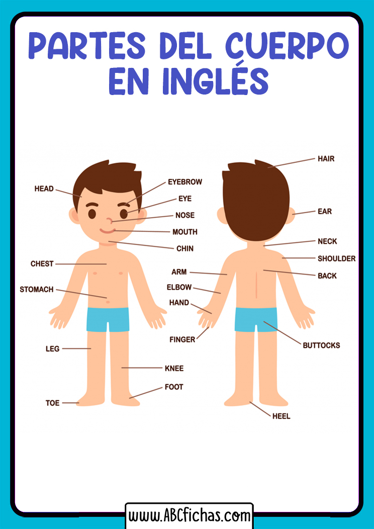 Partes del cuerpo en ingles para niños