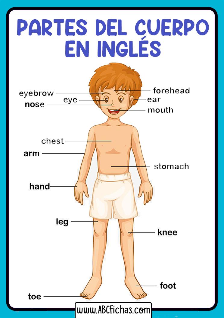 Partes del cuerpo en ingles
