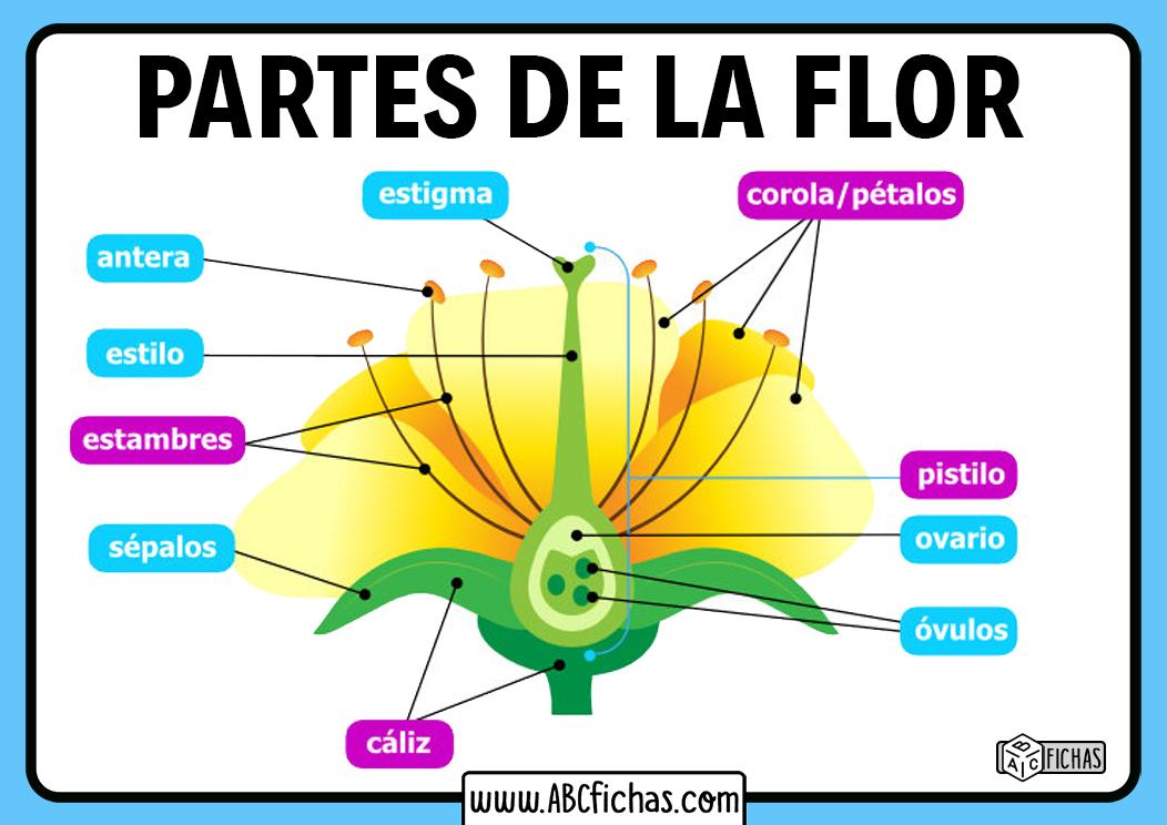 Que partes forman una flor