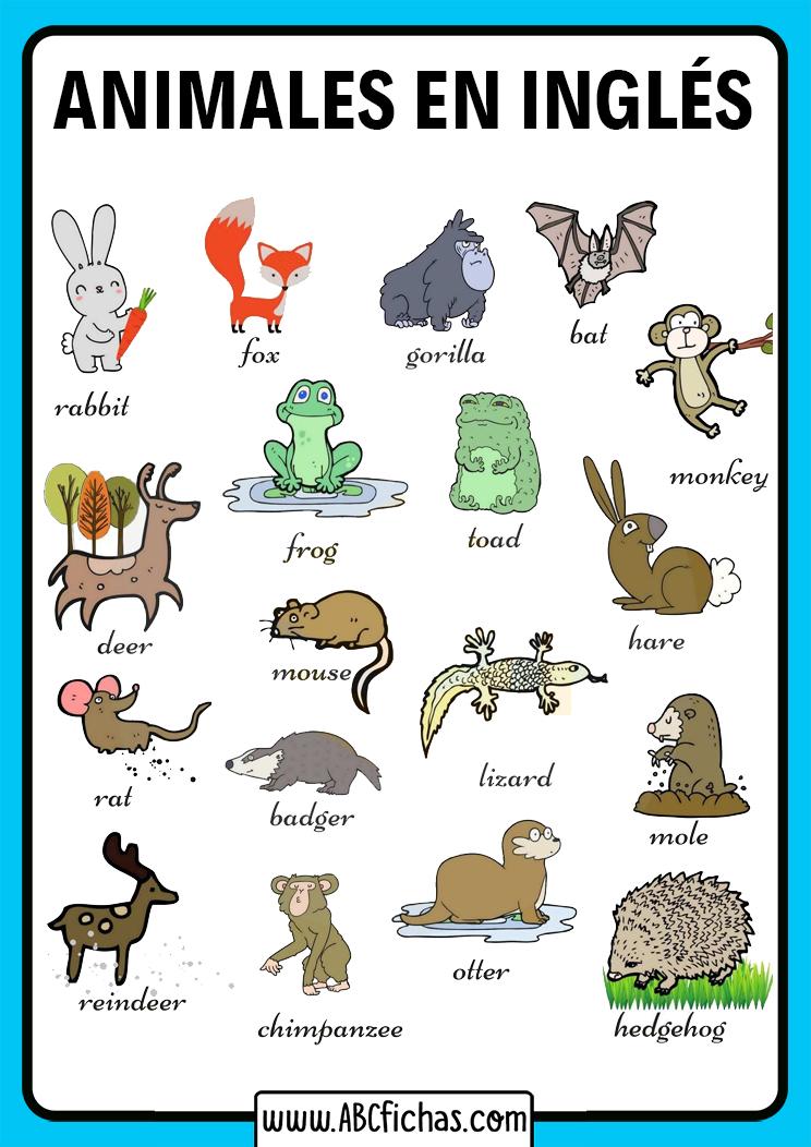 Vocabulario animales en ingles para niños