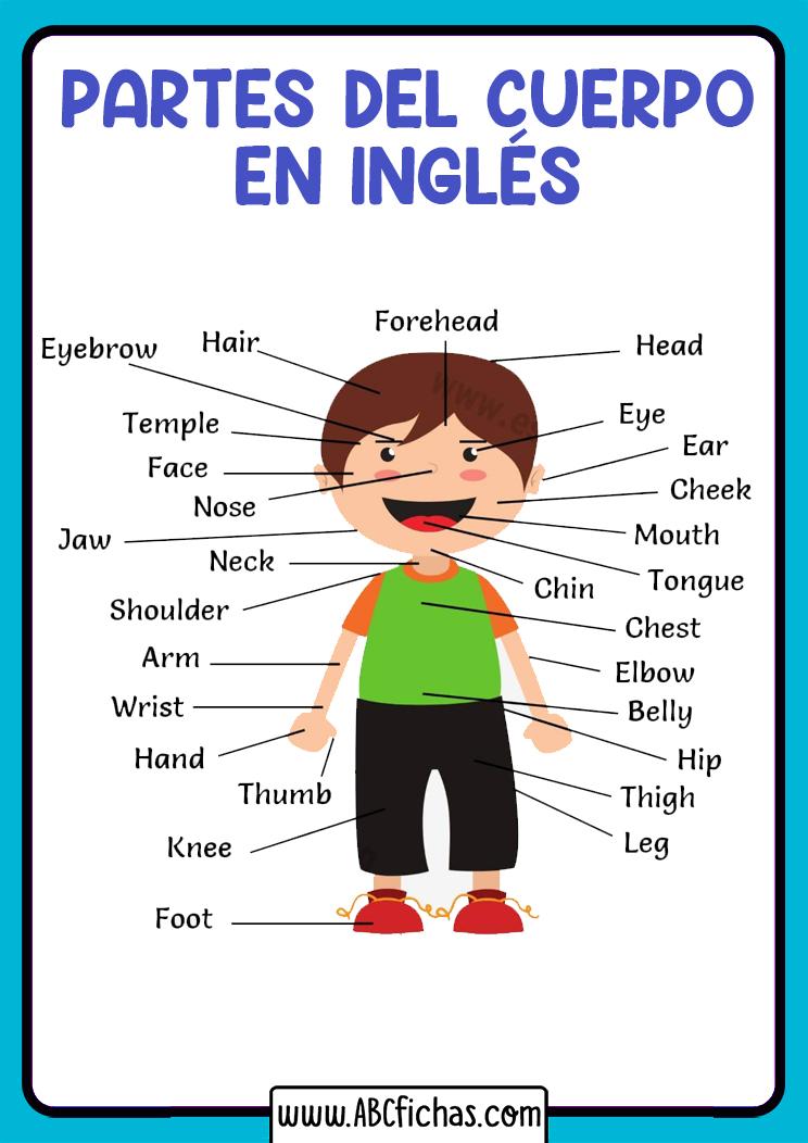 Vocabulario partes del cuerpo ingles