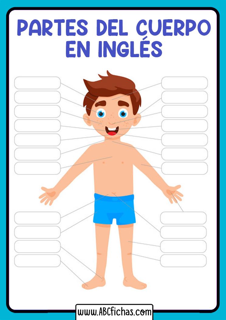 Vocabulario partes del cuerpo para rellenar