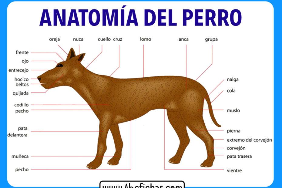 Anatomia y partes de un perro