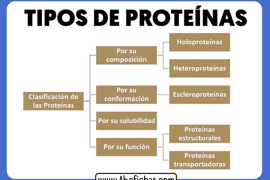 Clasificacion y tipos de proteinas