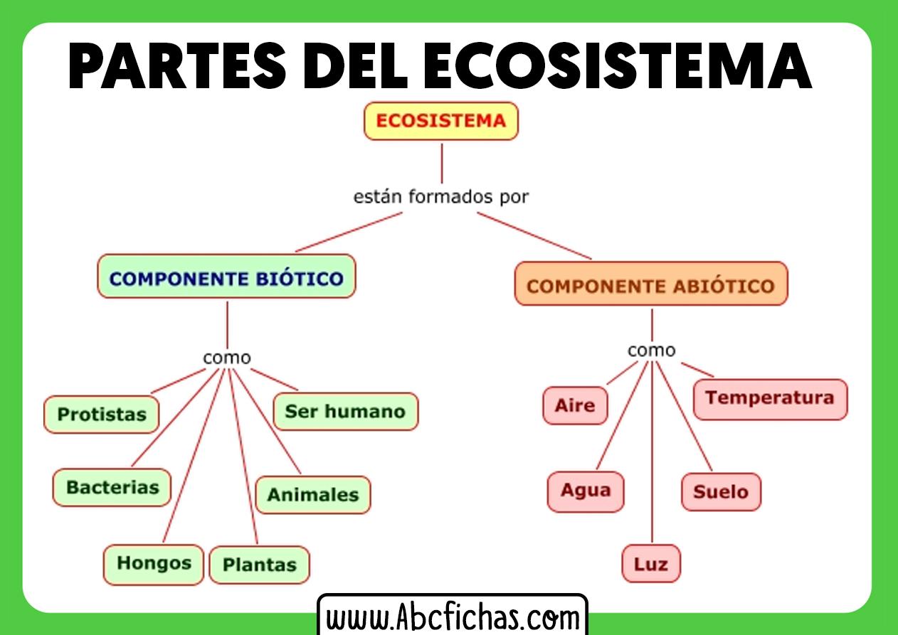 Componentes de un ecosistema y sus partes