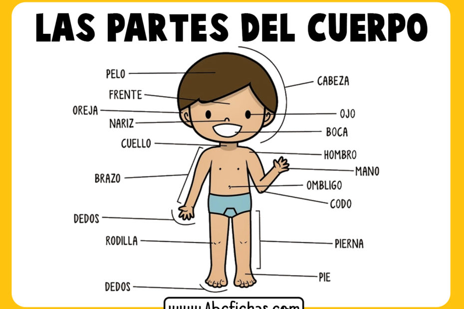Dibujo de partes del cuerpo para niños