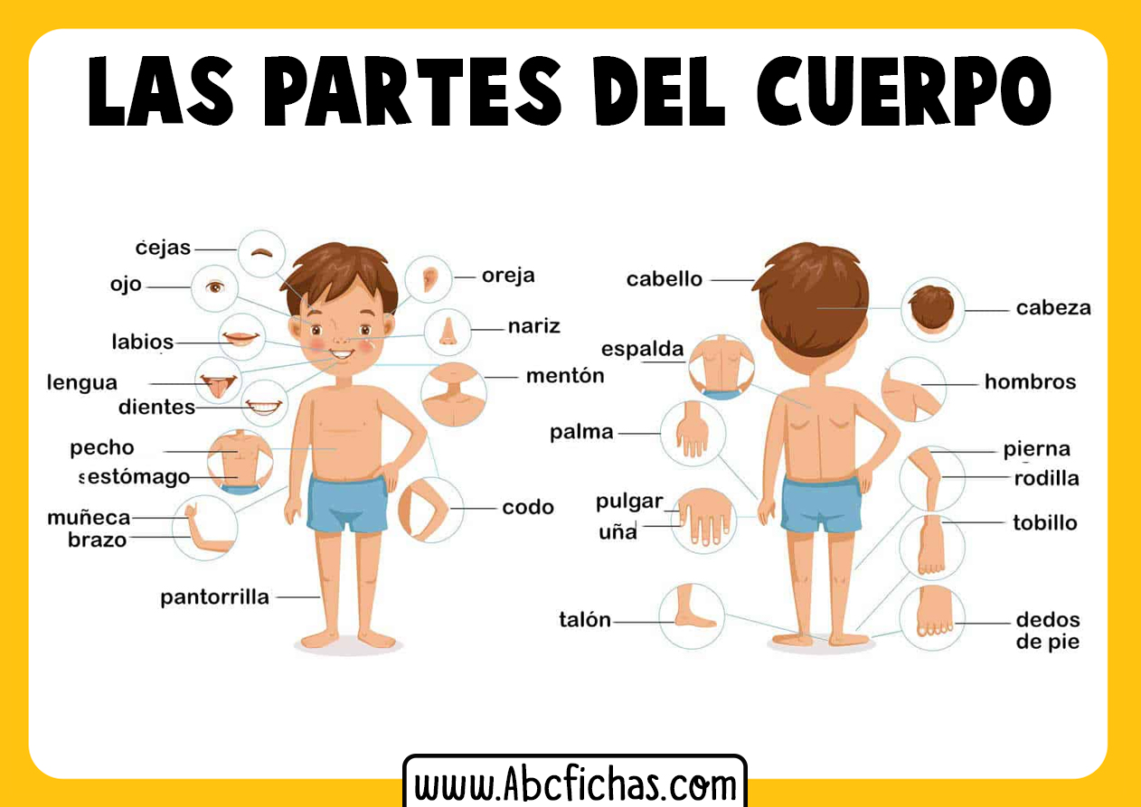 Dibujo de las partes del cuerpo para infantil