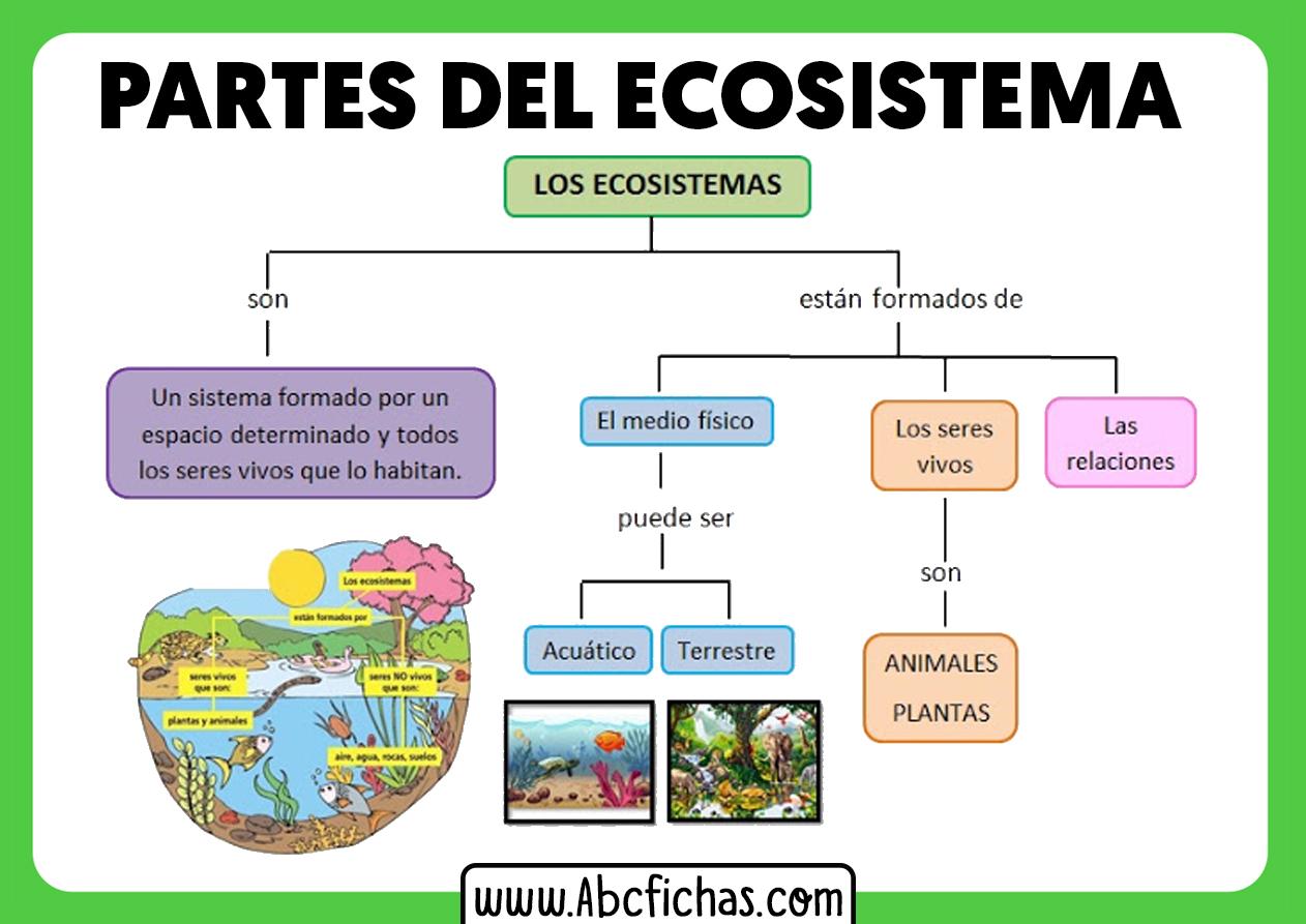Elementos de un ecosistema