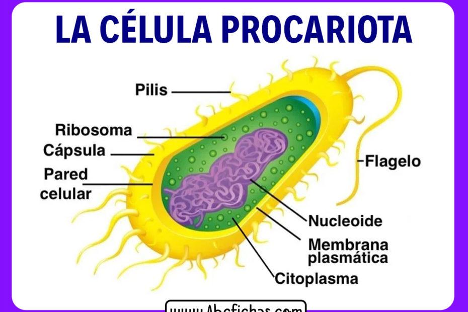 Funcion de la celula procariota