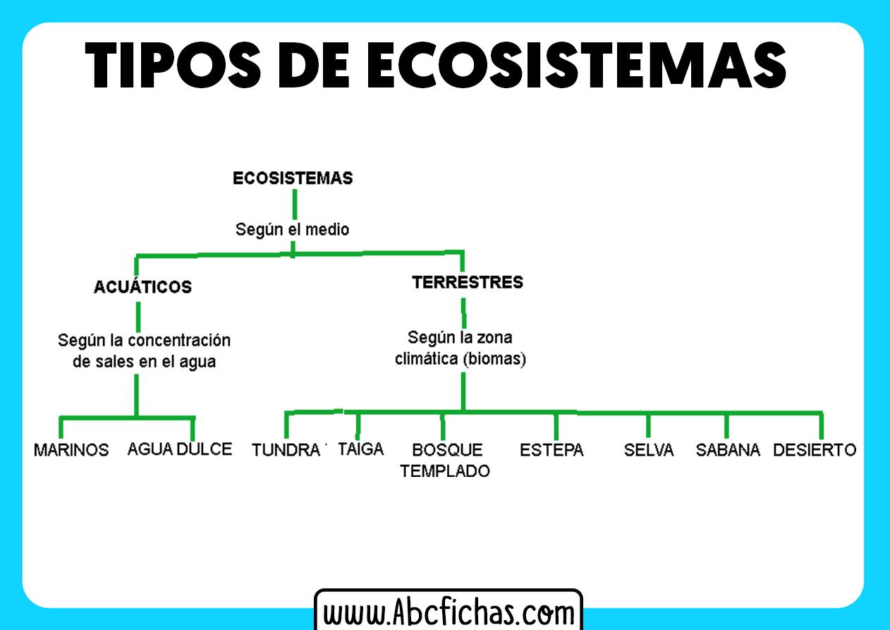 Los ecosistemas y sus tipos