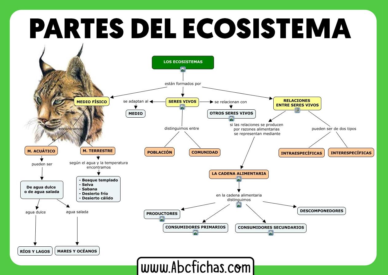 Partes de un ecosistema