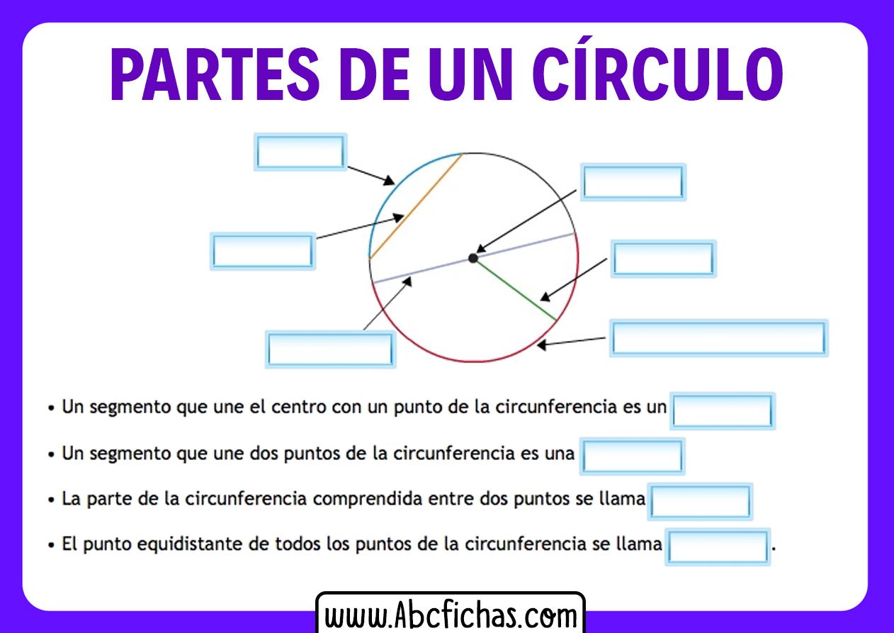 Partes del circulo sin nombres para completar