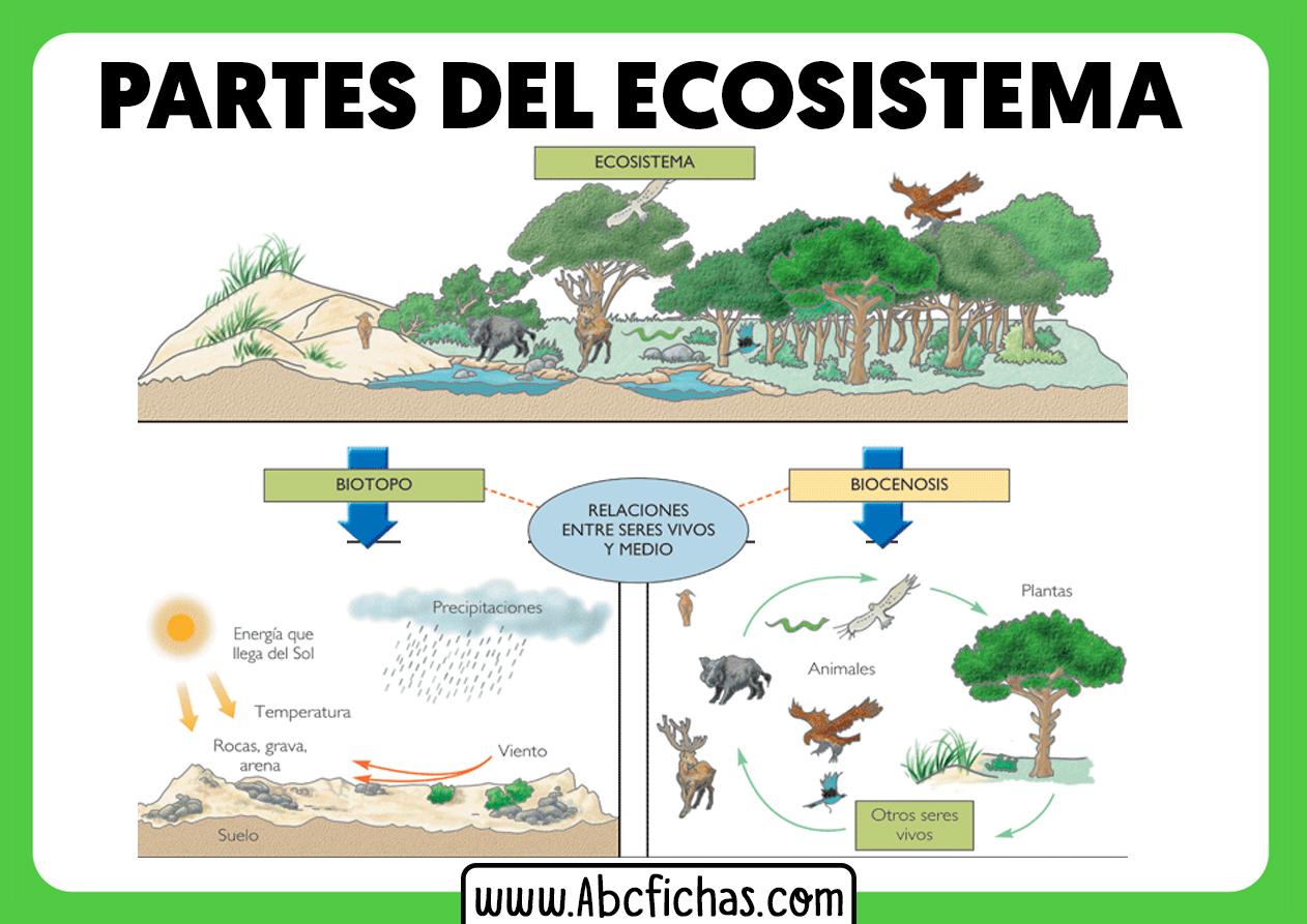 Que es un ecosistema y sus partes