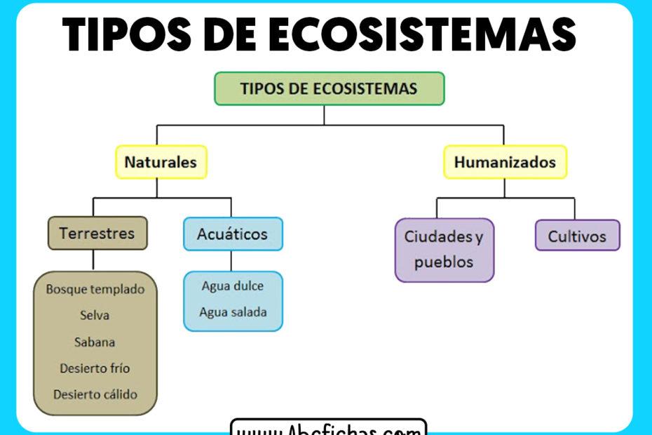 Tipos de ecosistemas esquema