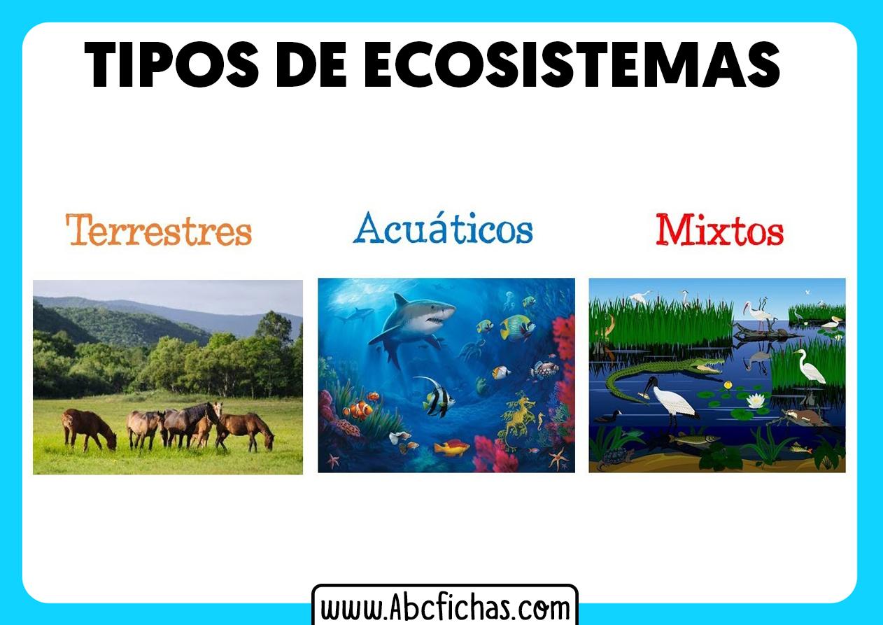 Tipos de ecosistemas mixtos terrestres y acuaticos