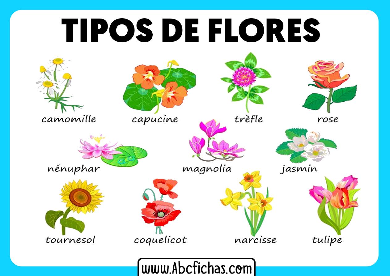 Tipos de flores de plantas