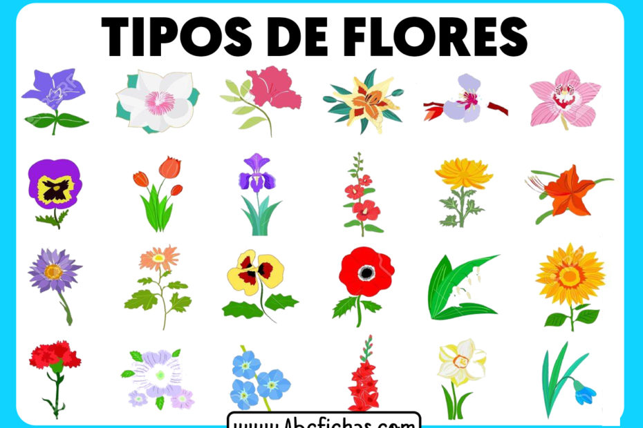Tipos de flores en dibujo