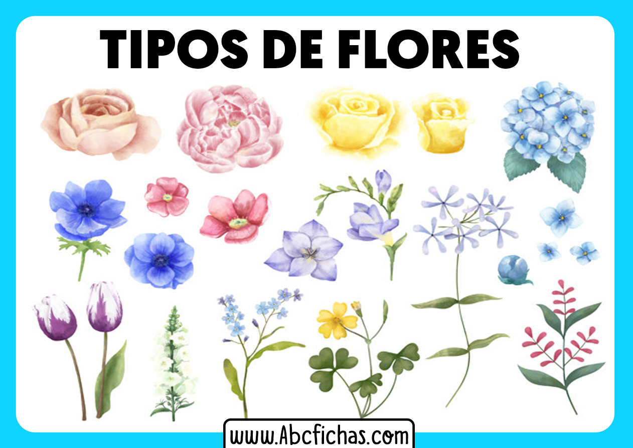 Tipos de flores para dibujar