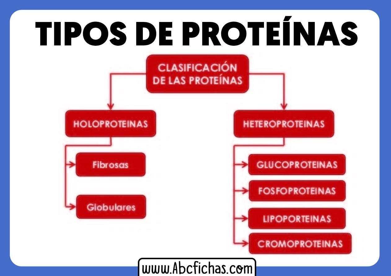 Tipos de proteinas y clasificacion